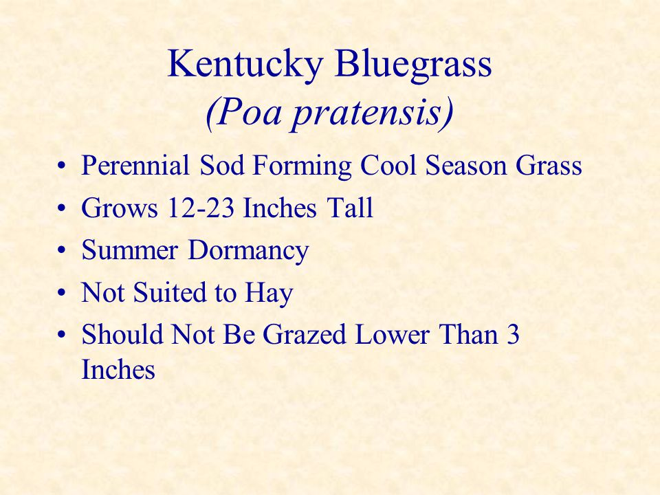 Kentucky Bluegrass (Poa pratensis) Perennial Sod Forming Cool Season Grass Grows 12-23 Inches Tall Summer Dormancy Not Suited to Hay Should Not Be Gra