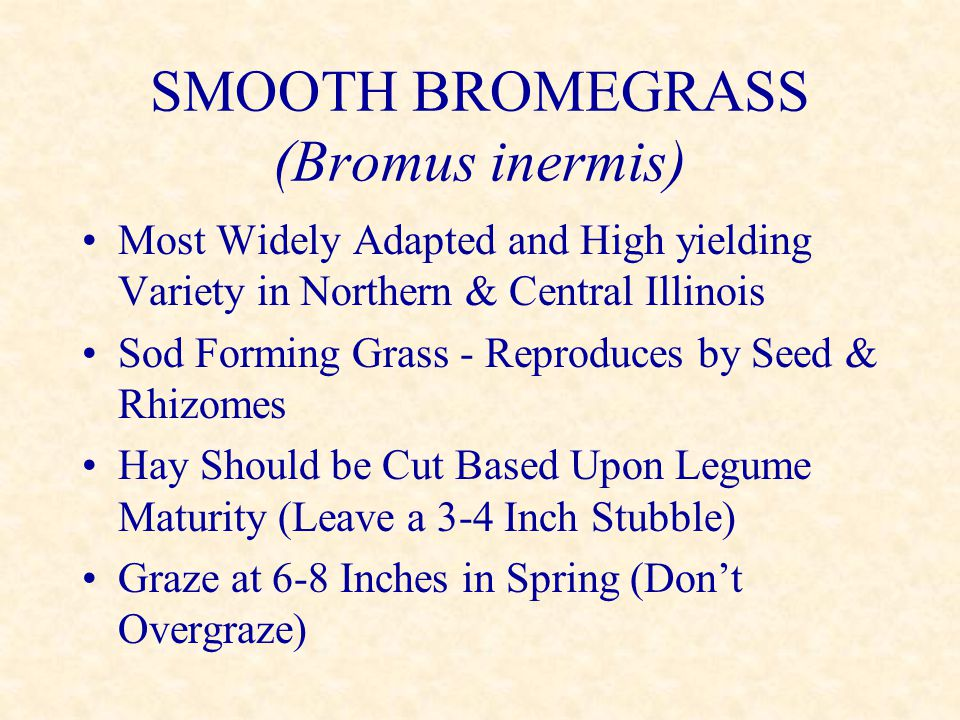 SMOOTH BROMEGRASS (Bromus inermis) Most Widely Adapted and High yielding Variety in Northern & Central Illinois Sod Forming Grass - Reproduces by Seed