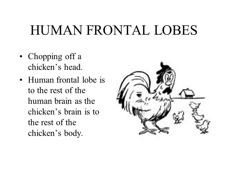 HUMAN FRONTAL LOBES Chopping off a chickens head. Human frontal lobe is to the rest of the human brain as the chickens brain is to the rest of the chi