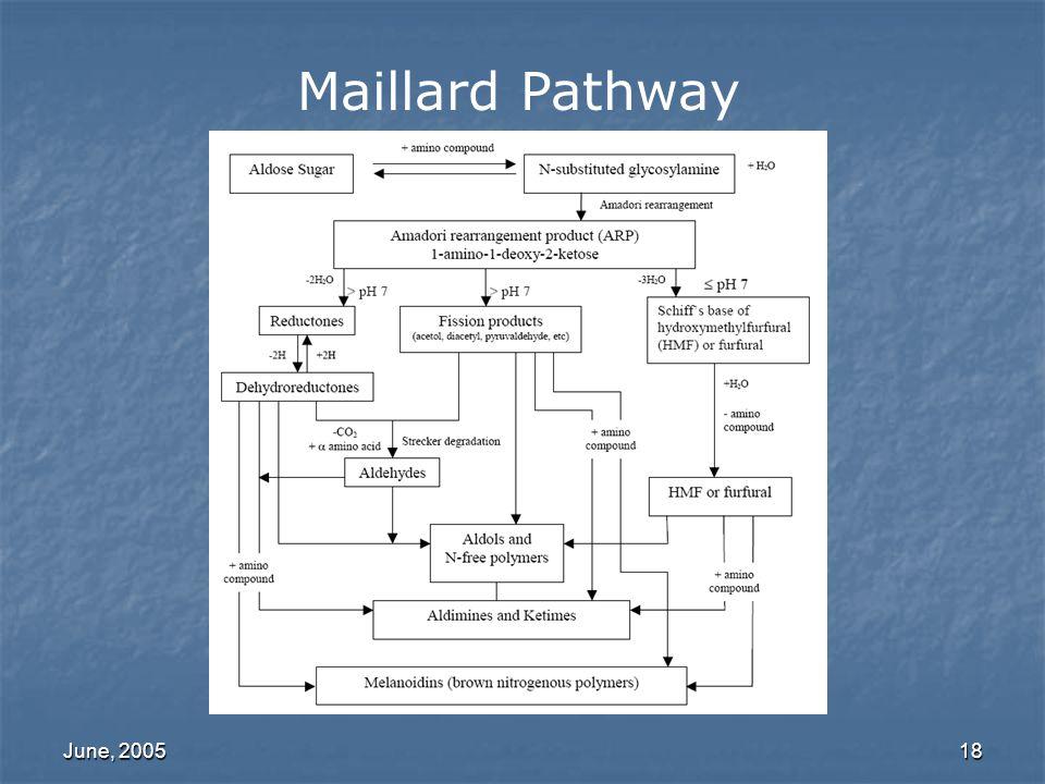June, 200518 Maillard Pathway