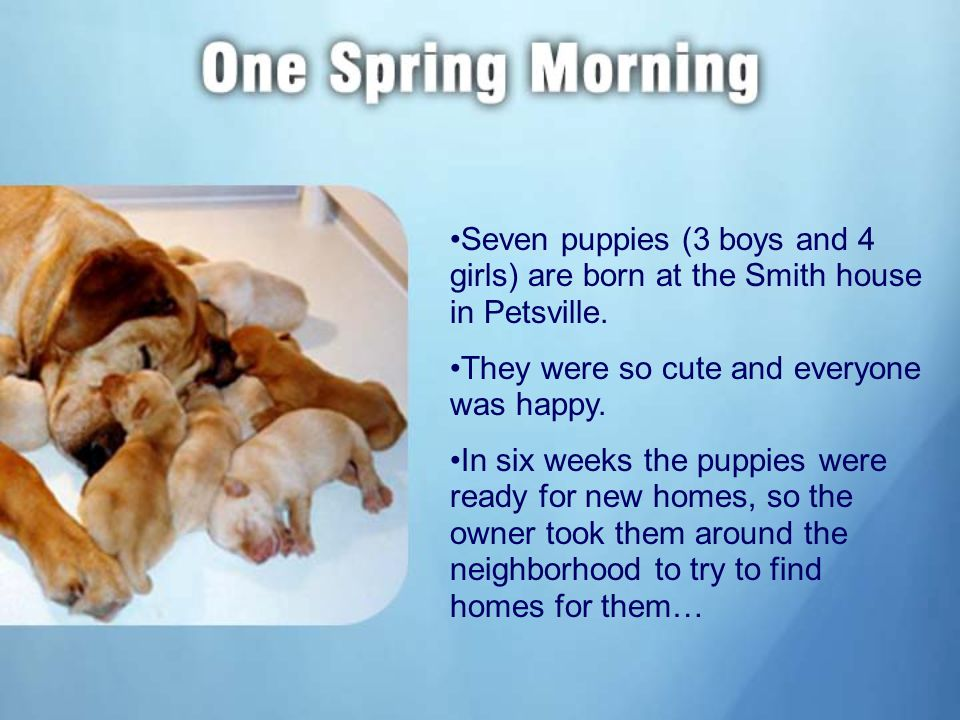 Seven puppies (3 boys and 4 girls) are born at the Smith house in Petsville.