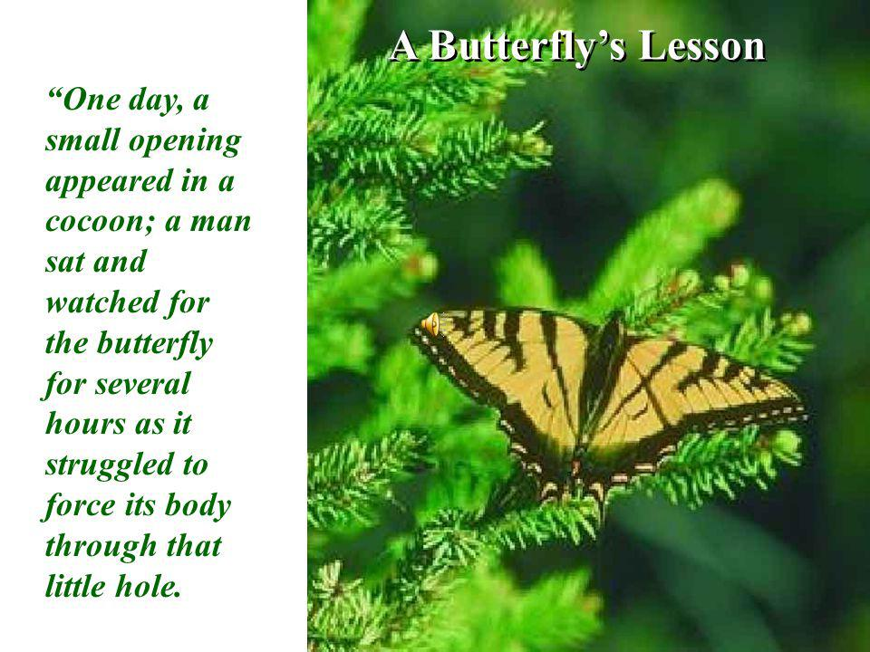 A Butterflys Lesson One day, a small opening appeared in a cocoon; a man sat and watched for the butterfly for several hours as it struggled to force its body through that little hole.