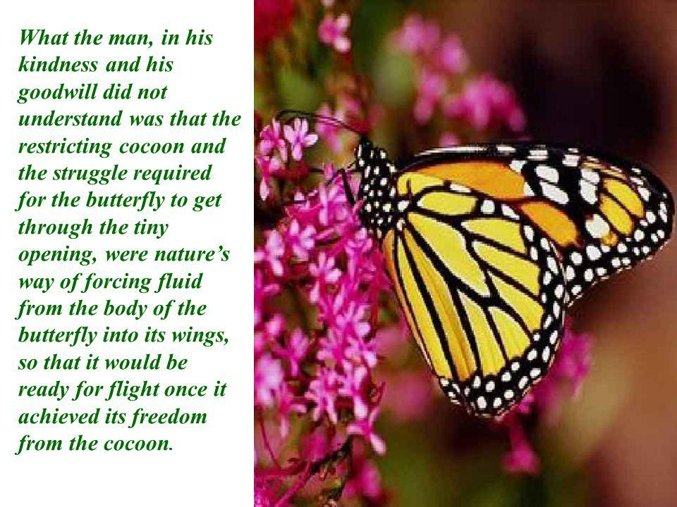 What the man, in his kindness and his goodwill did not understand was that the restricting cocoon and the struggle required for the butterfly to get through the tiny opening, were natures way of forcing fluid from the body of the butterfly into its wings, so that it would be ready for flight once it achieved its freedom from the cocoon.