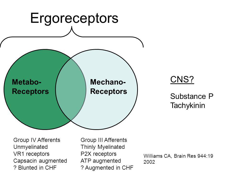 Ergoreceptors Mechano- Receptors Metabo- Receptors Group IV Afferents Unmyelinated VR1 receptors Capsacin augmented .