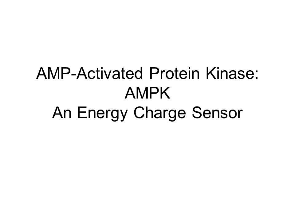 AMP-Activated Protein Kinase: AMPK An Energy Charge Sensor