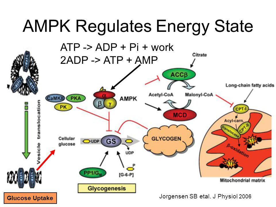 AMPK Regulates Energy State ATP -> ADP + Pi + work 2ADP -> ATP + AMP Jorgensen SB etal.