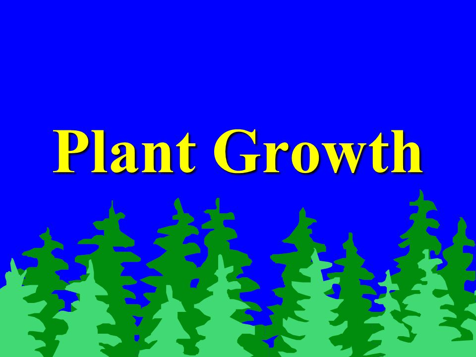 Phases of plant growth Dormancy:Dormancy: –Period of inactivity.