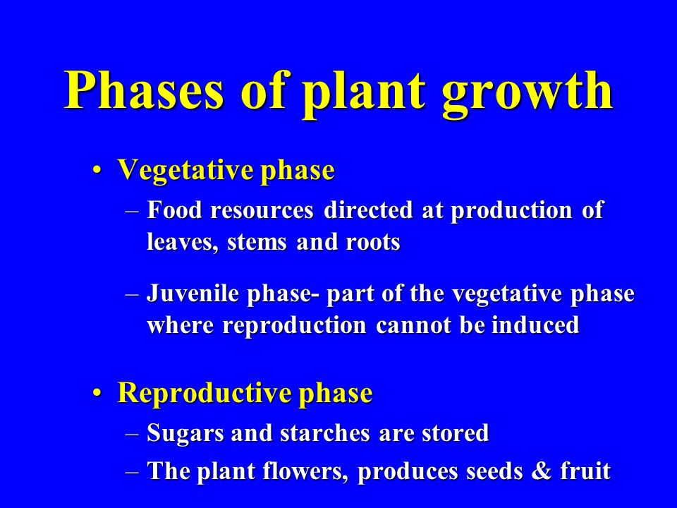 Phases of plant growth Vegetative phaseVegetative phase –Food resources directed at production of leaves, stems and roots –Juvenile phase- part of the