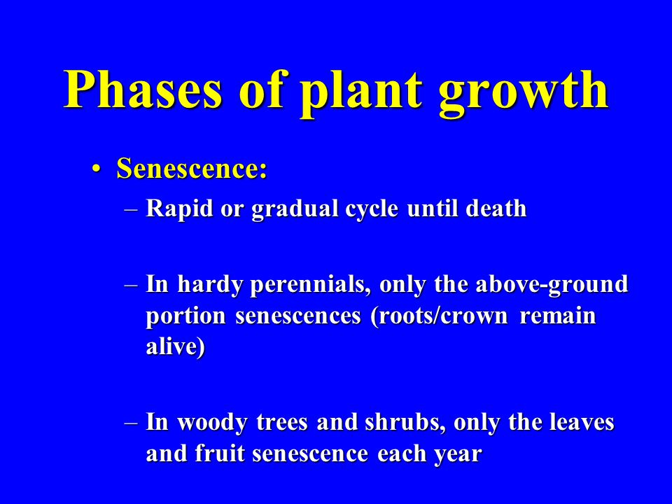 Phases of plant growth Senescence:Senescence: –Rapid or gradual cycle until death –In hardy perennials, only the above-ground portion senescences (roots/crown remain alive) –In woody trees and shrubs, only the leaves and fruit senescence each year