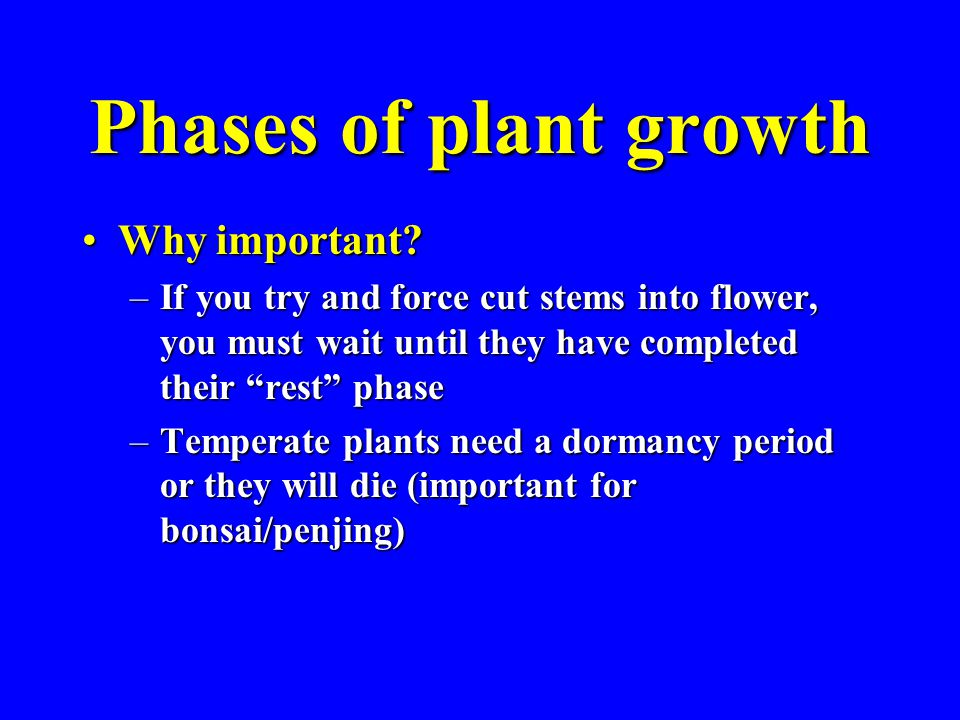 Phases of plant growth Vegetative/Reproductive cycles are regulated by:Vegetative/Reproductive cycles are regulated by: –Age/maturity of the plant –Carbohydrate/nitrogen balance in the plant Carbohydrates come from photosynthesis in leavesCarbohydrates come from photosynthesis in leaves Nitrogen is taken up by the rootsNitrogen is taken up by the roots Too much nitrogen fertilizer can prevent a plant from becoming reproductive (flowering)Too much nitrogen fertilizer can prevent a plant from becoming reproductive (flowering)