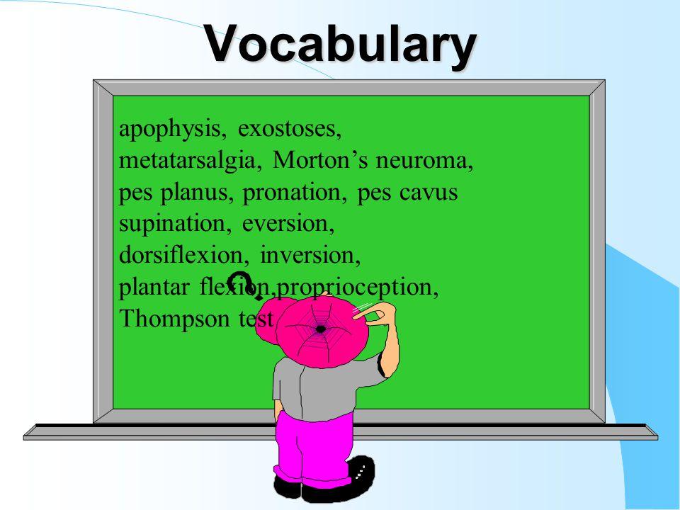 Vocabulary apophysis, exostoses, metatarsalgia, Mortons neuroma, pes planus, pronation, pes cavus supination, eversion, dorsiflexion, inversion, plantar flexion,proprioception, Thompson test