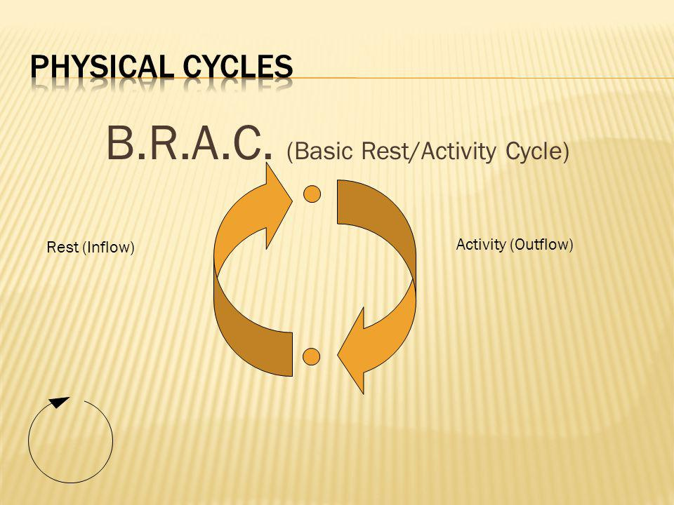 B.R.A.C. (Basic Rest/Activity Cycle) Activity (Outflow) Rest (Inflow)
