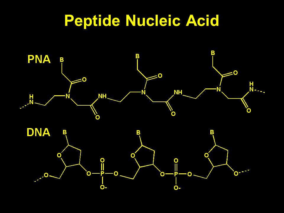 Peptide Nucleic Acid