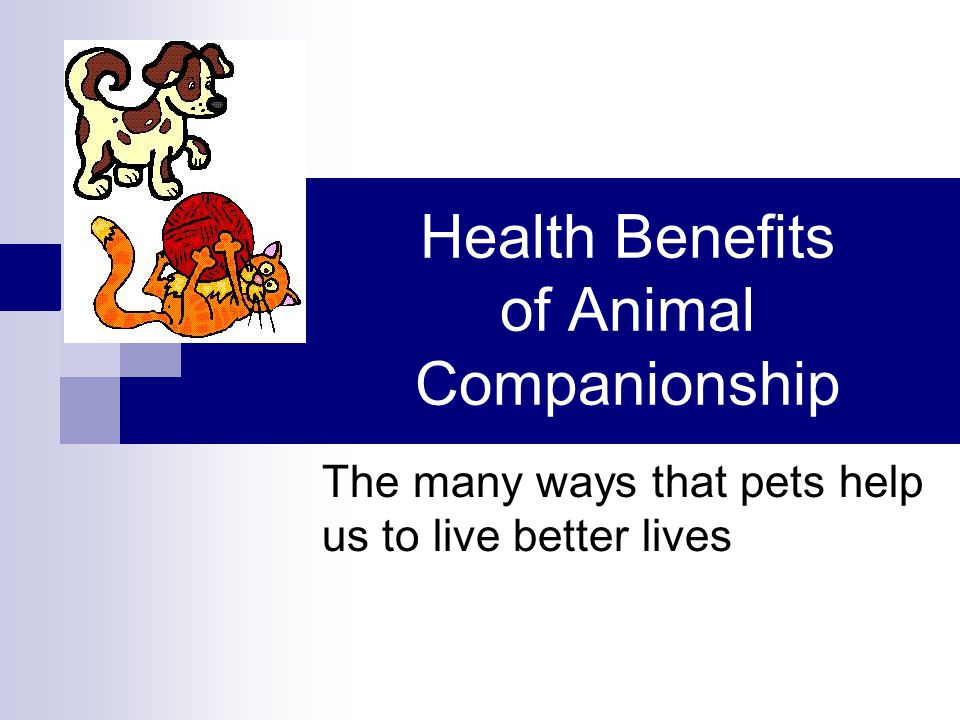 Health Benefits of Animal Companionship The many ways that pets help us to live better lives