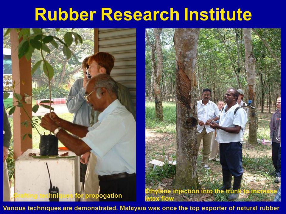 Rubber Research Institute Various techniques are demonstrated.