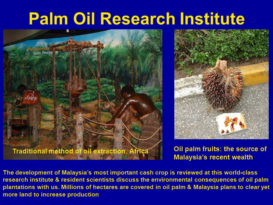 Palm Oil Research Institute The development of Malaysias most important cash crop is reviewed at this world-class research institute & resident scientists discuss the environmental consequences of oil palm plantations with us.