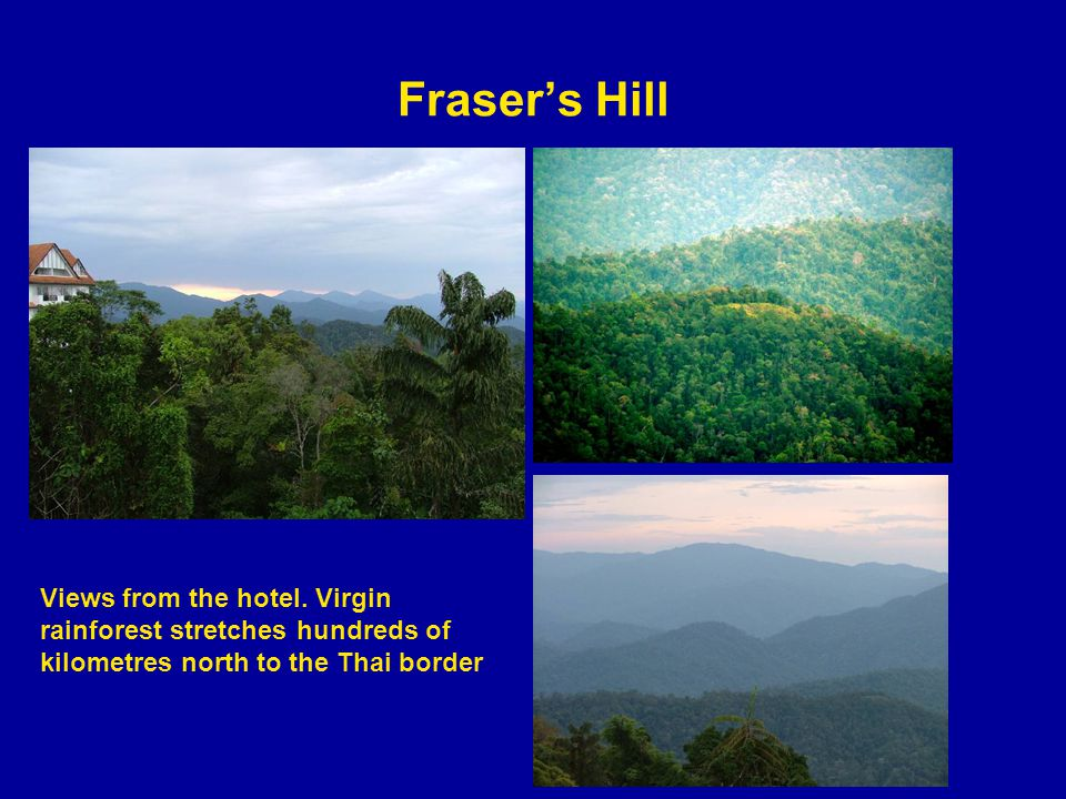 Frasers Hill Views from the hotel.