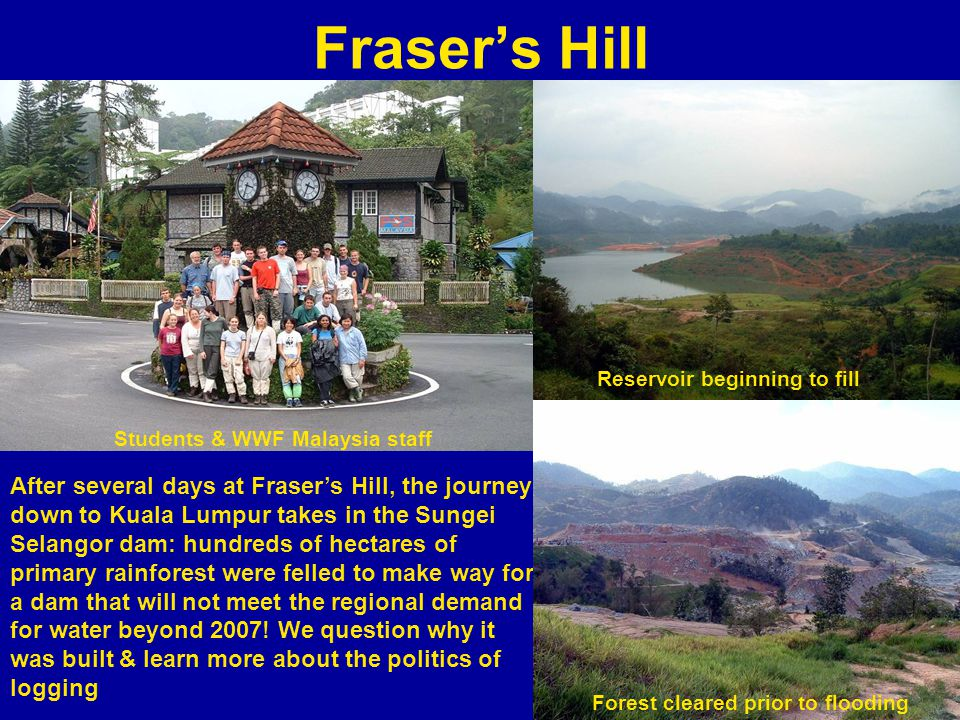 Frasers Hill After several days at Frasers Hill, the journey down to Kuala Lumpur takes in the Sungei Selangor dam: hundreds of hectares of primary rainforest were felled to make way for a dam that will not meet the regional demand for water beyond 2007.