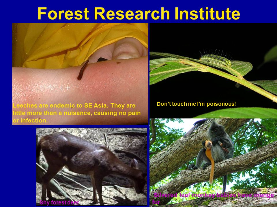 Forest Research Institute Leeches are endemic to SE Asia.