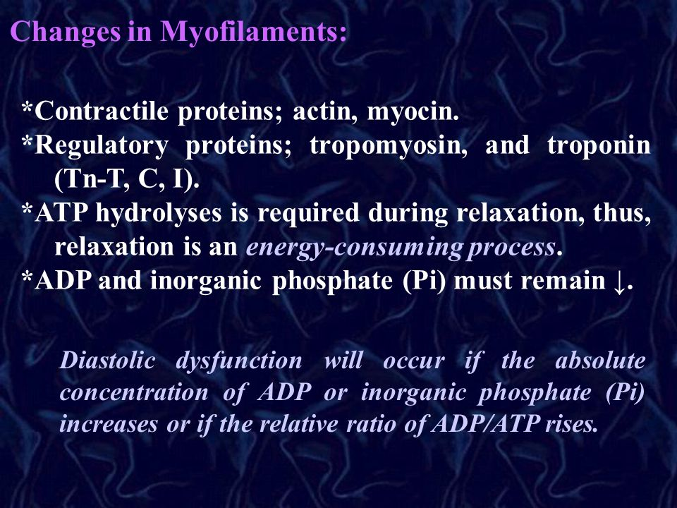 Changes in Myofilaments: *Contractile proteins; actin, myocin.