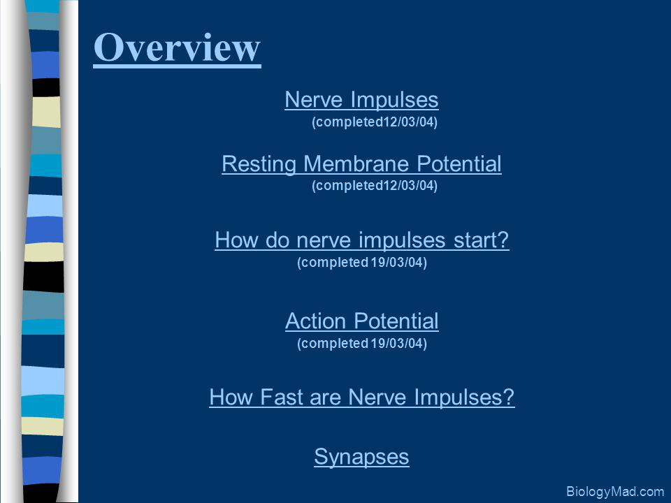 Overview Nerve Impulses (completed12/03/04) Resting Membrane Potential (completed12/03/04) How do nerve impulses start.