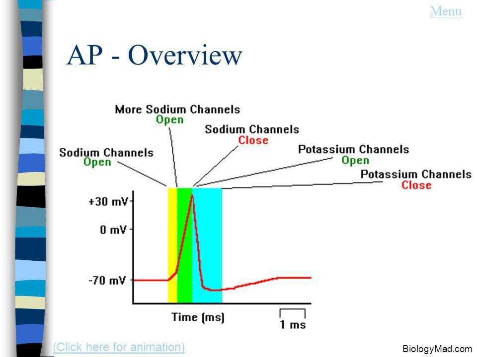 AP - Overview BiologyMad.com Menu (Click here for animation)