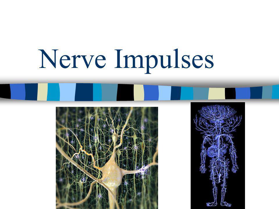 Nerve Impulses
