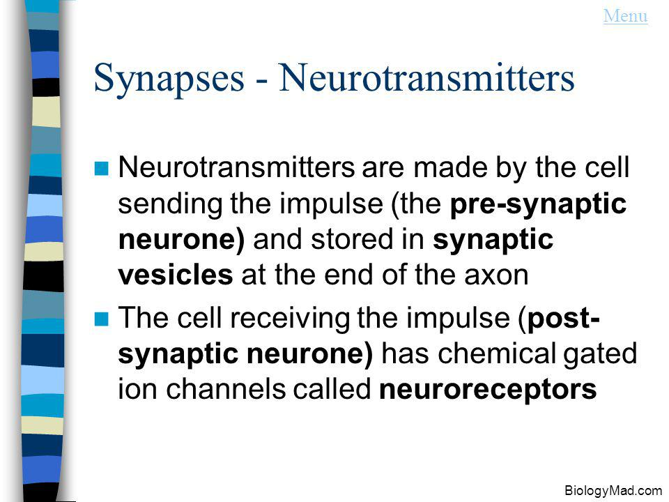 Synapses - Neurotransmitters Neurotransmitters are made by the cell sending the impulse (the pre-synaptic neurone) and stored in synaptic vesicles at the end of the axon The cell receiving the impulse (post- synaptic neurone) has chemical gated ion channels called neuroreceptors Menu BiologyMad.com