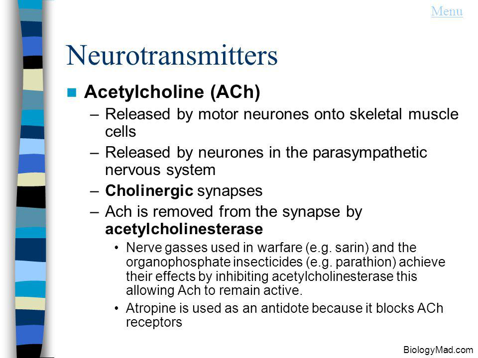 Neurotransmitters Acetylcholine (ACh) –Released by motor neurones onto skeletal muscle cells –Released by neurones in the parasympathetic nervous system –Cholinergic synapses –Ach is removed from the synapse by acetylcholinesterase Nerve gasses used in warfare (e.g.