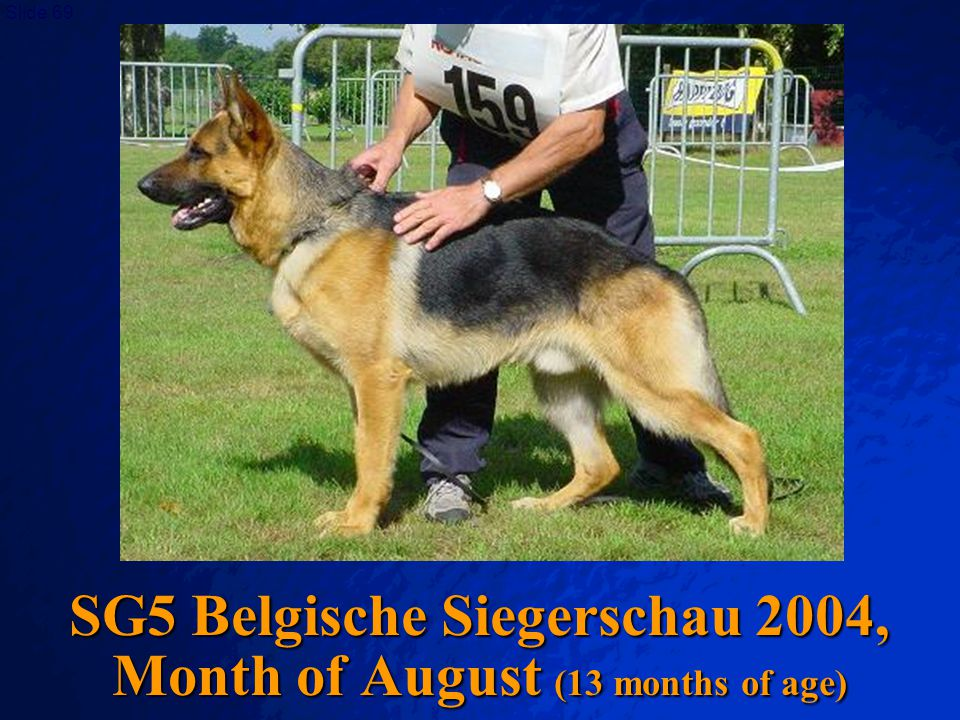 © 2003 By Default! A Free sample background from www.awesomebackgrounds.com Slide 68 And finally, the Belgian Siegerschau! (SV-Judge L. Schweikert)