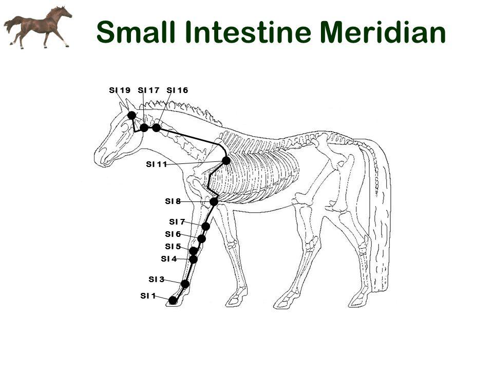 Small Intestine Meridian SI 19SI 17 SI 11 SI 8 SI 7 SI 6 SI 5 SI 4 SI 16 SI 3 SI 1
