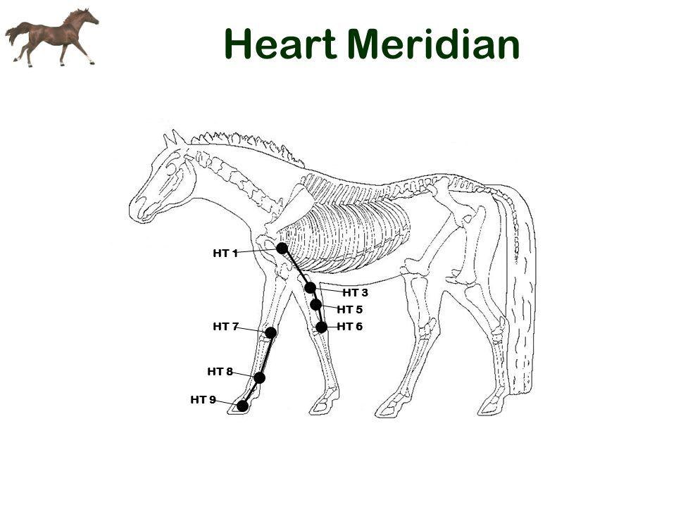 Heart Meridian HT 1 HT 3 HT 5 HT 6HT 7 HT 8 HT 9