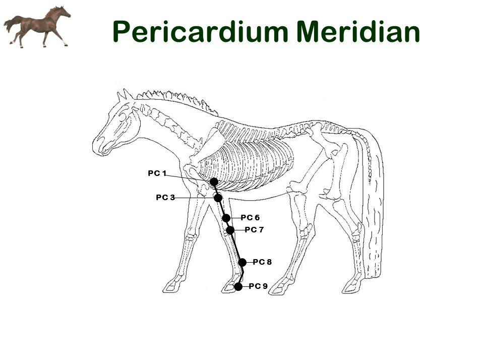 Pericardium Meridian PC 1 PC 3 PC 6 PC 9 PC 8 PC 7