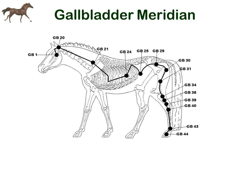 Gallbladder Meridian GB 21 GB 44 GB 43 GB 40 GB 39 GB 38 GB 34 GB 24 GB 20 GB 25 GB 1 GB 29 GB 30 GB 31