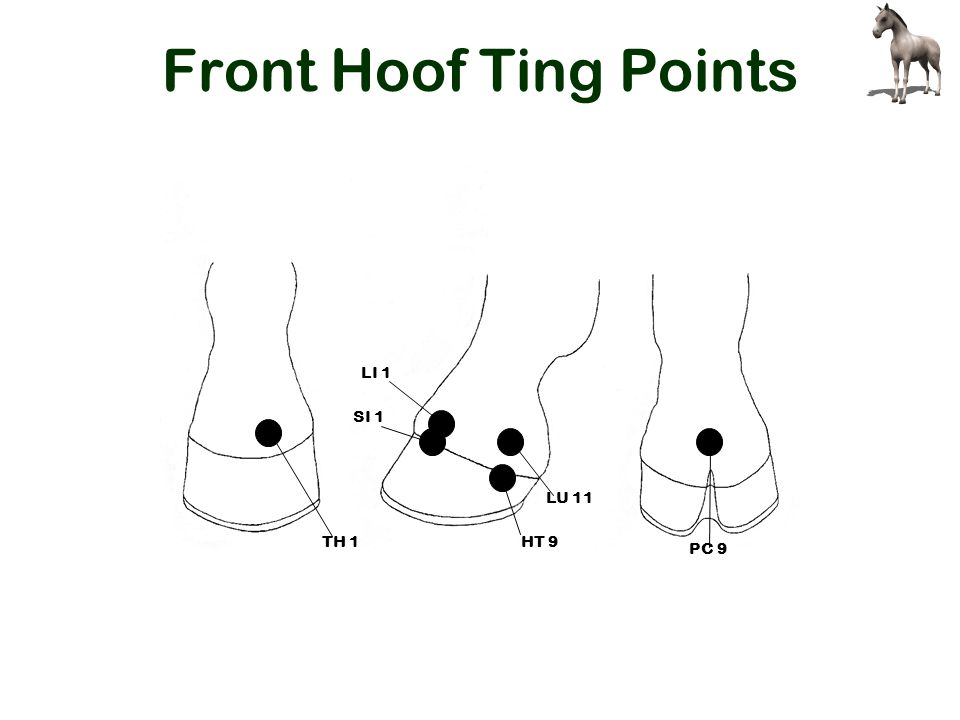 Front Hoof Ting Points TH 1 LU 11 LI 1 HT 9 SI 1 PC 9