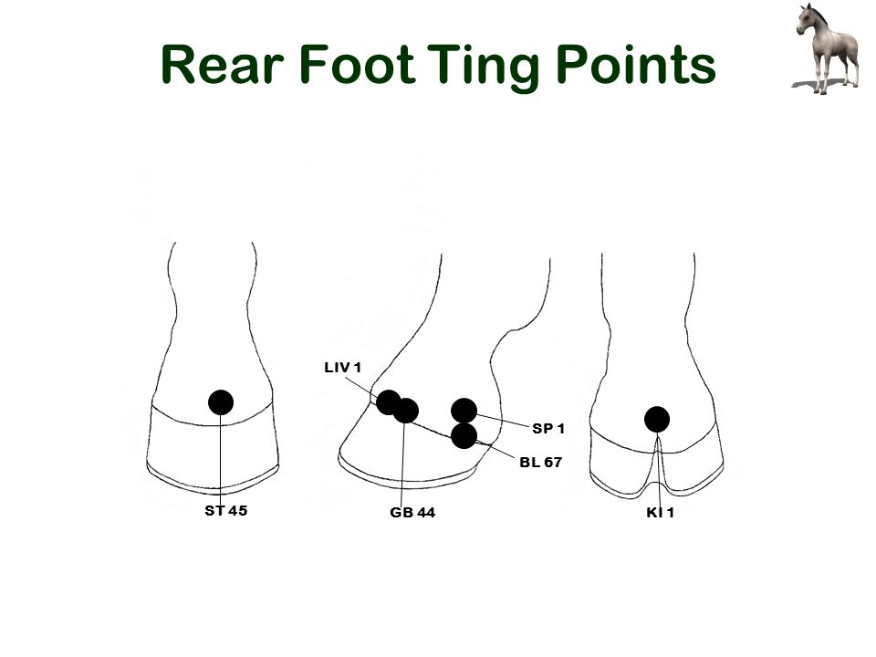 Rear Foot Ting Points SP 1 BL 67 LIV 1 ST 45 KI 1GB 44