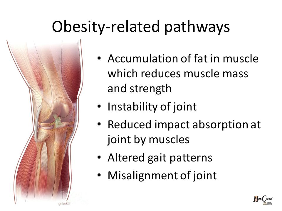 Obesity-related pathways Accumulation of fat in muscle which reduces muscle mass and strength Instability of joint Reduced impact absorption at joint by muscles Altered gait patterns Misalignment of joint