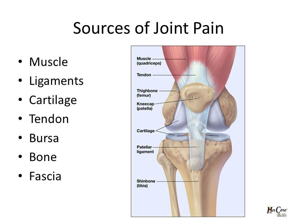 Sources of Joint Pain Muscle Ligaments Cartilage Tendon Bursa Bone Fascia