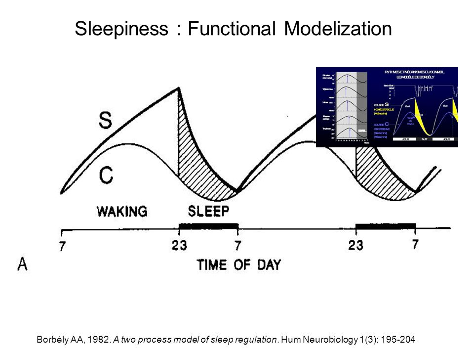 Sleepiness : Functional Modelization Borbély AA, 1982. A two process model of sleep regulation. Hum Neurobiology 1(3): 195-204