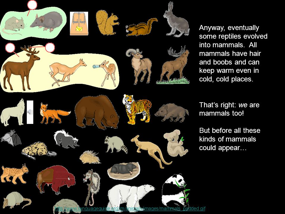 Anyway, eventually some reptiles evolved into mammals.