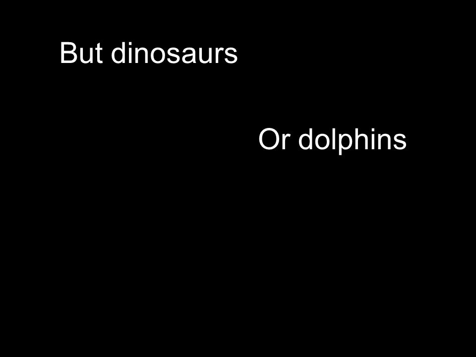 Or dolphins