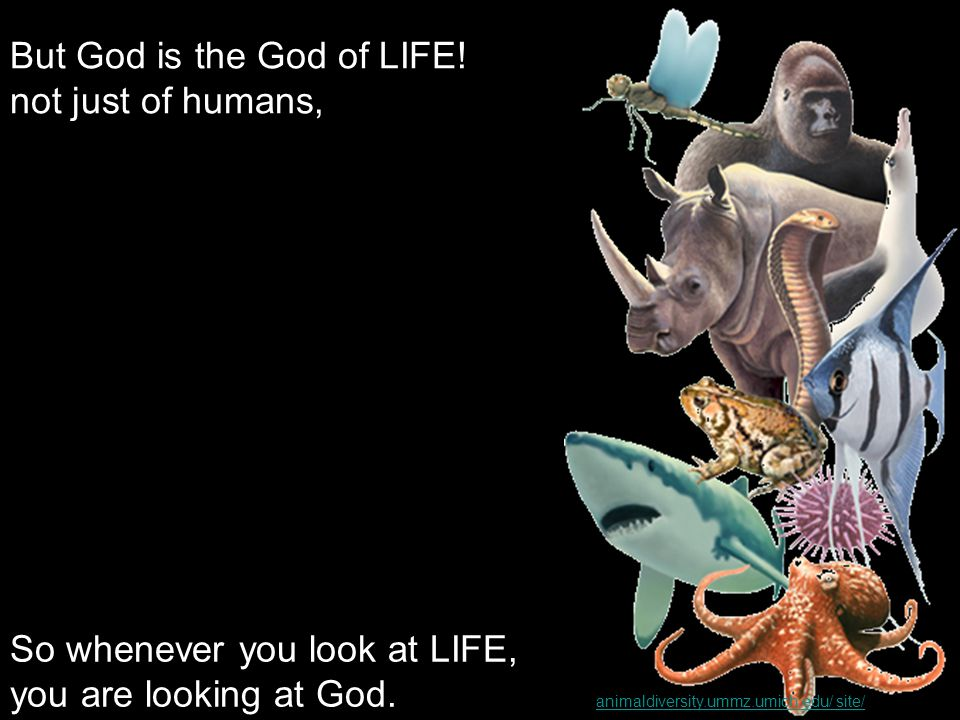 But God is the God of LIFE.