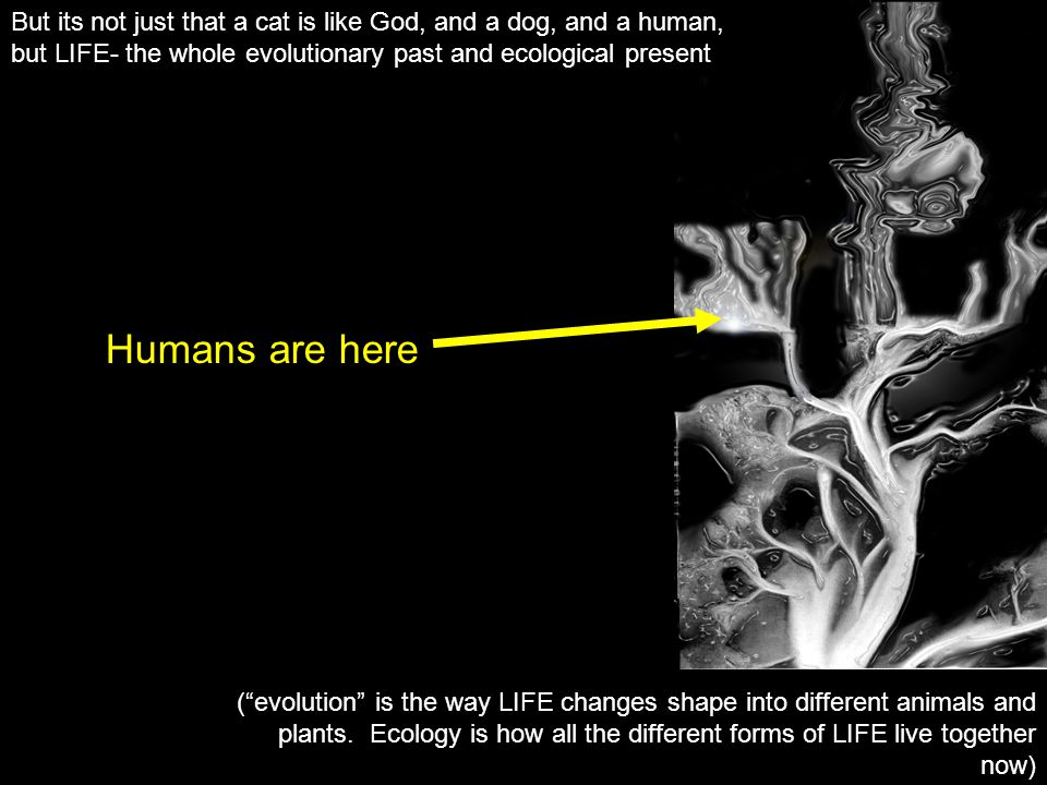 But its not just that a cat is like God, and a dog, and a human, but LIFE- the whole evolutionary past and ecological present (evolution is the way LIFE changes shape into different animals and plants.