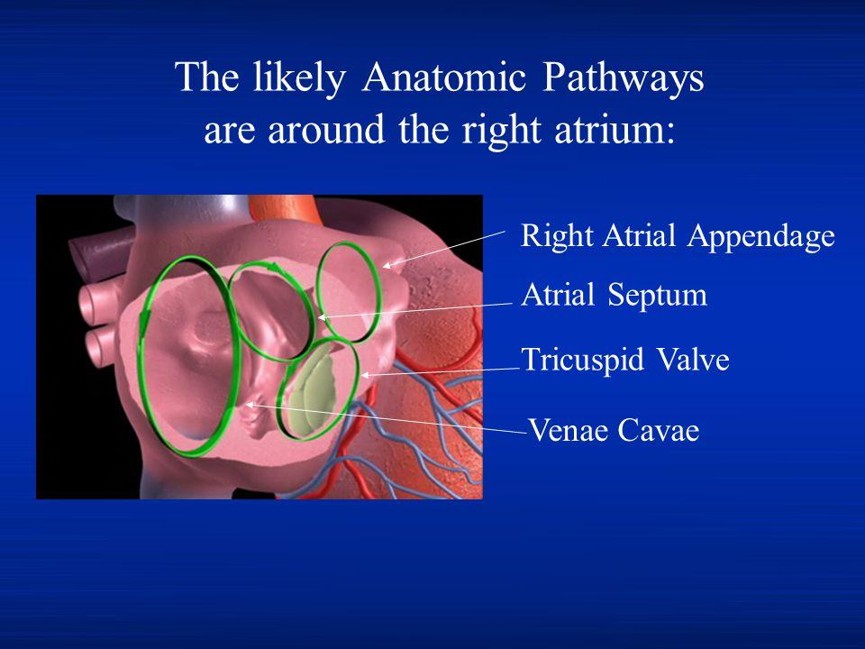 The likely Anatomic Pathways are around the right atrium: Venae Cavae Atrial Septum Tricuspid Valve Right Atrial Appendage