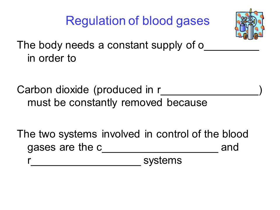 Regulation of blood gases The body needs a constant supply of o_________ in order to Carbon dioxide (produced in r________________) must be constantly