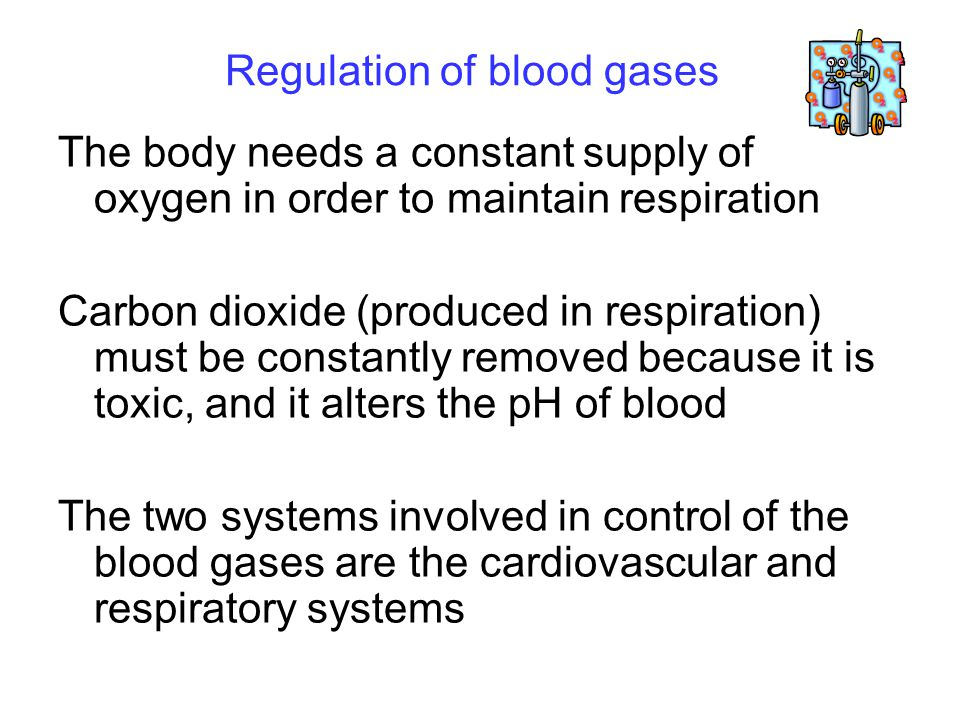 Regulation of blood gases The body needs a constant supply of oxygen in order to maintain respiration Carbon dioxide (produced in respiration) must be