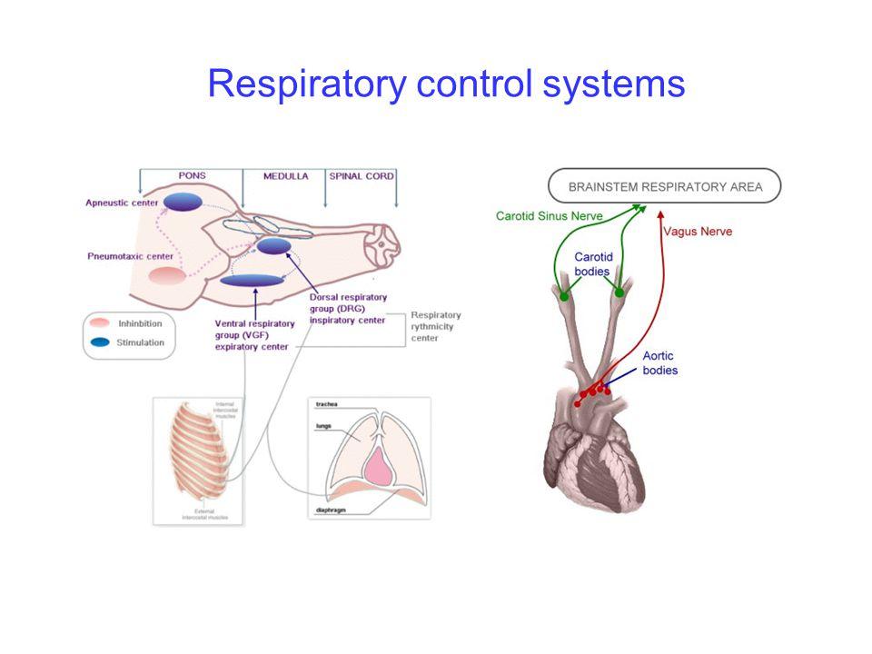 Cardiovascular control systems Define heart rate Define stroke volume Define cardiac output Cardiac output can be calculated by (CO = ) Define venous return It depends on Define blood pressure It depends on
