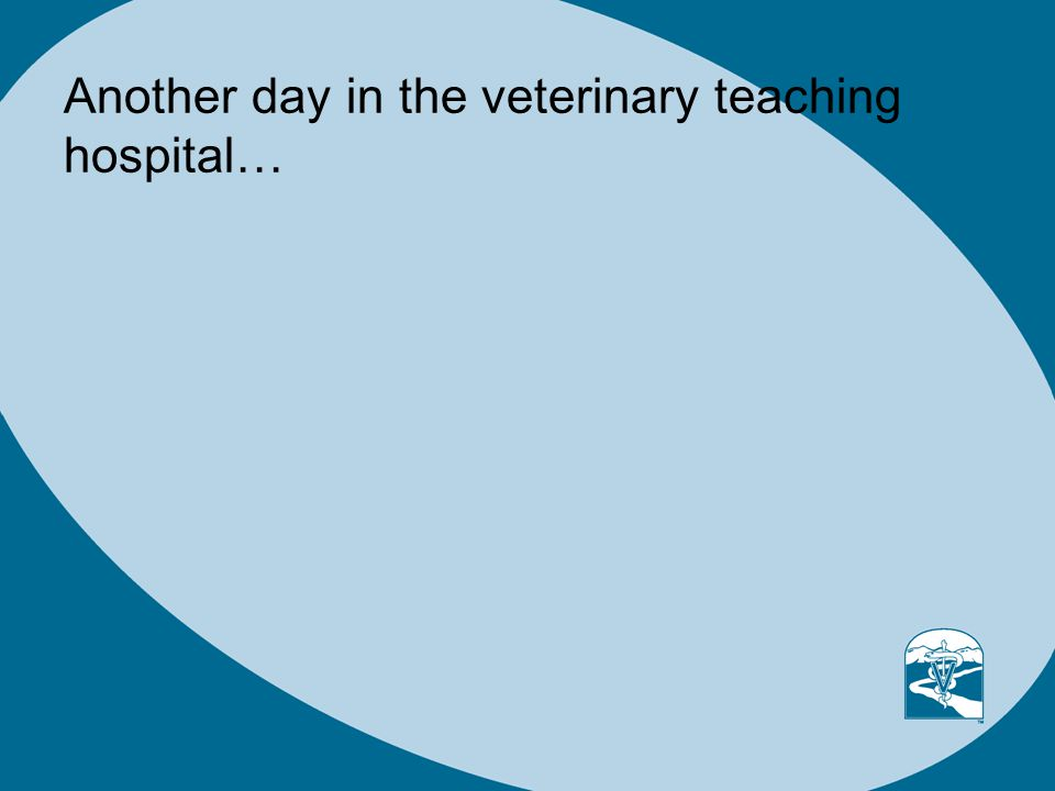 Another day in the veterinary teaching hospital…