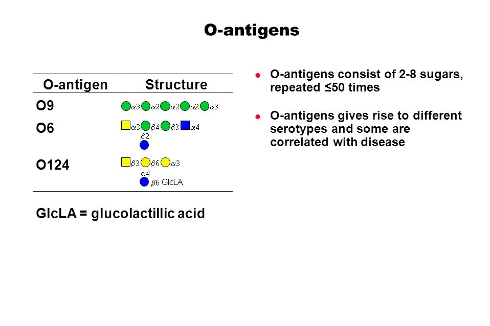O-antigens O-antigens consist of 2-8 sugars, repeated 50 times O-antigens gives rise to different serotypes and some are correlated with disease O-antigenStructure O9 O6 O124 GlcLA GlcLA = glucolactillic acid