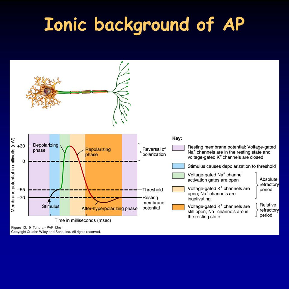 Ionic background of AP